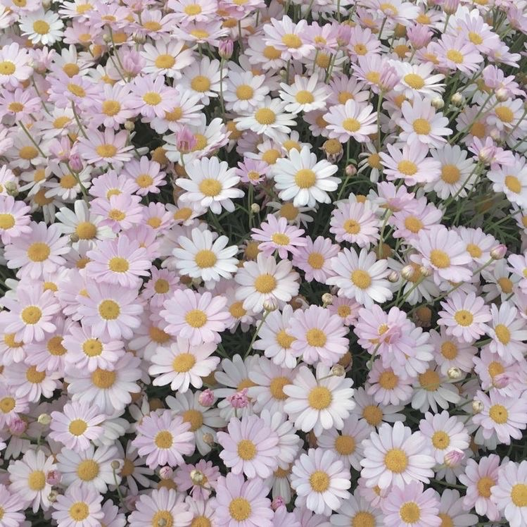 flowers, beautiful, and beauty image