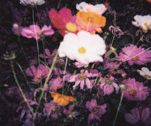 flowers and grunge image