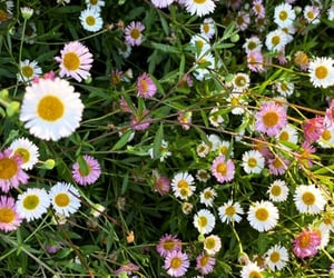 beuatiful, daisy, and green image