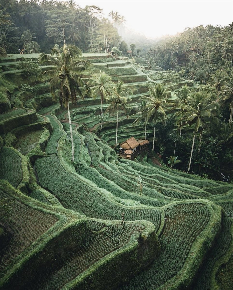 airport, bali, and indonesia image