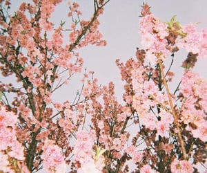 flower tree, flowers, and nature image