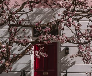 flowers, spring, and house image