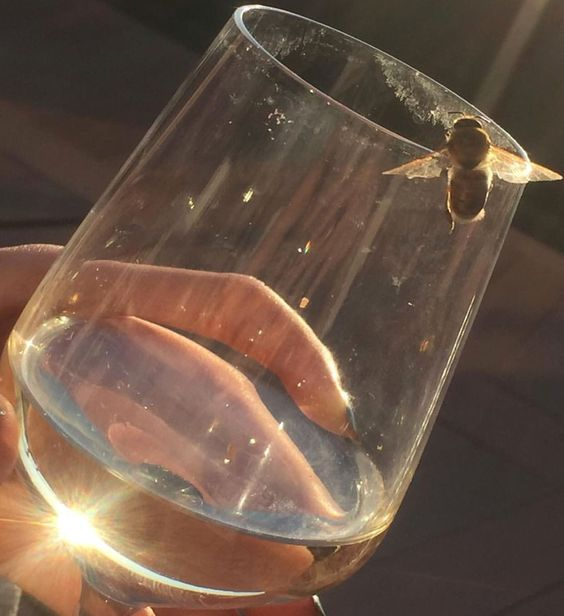 aesthetic, bee, and glass image