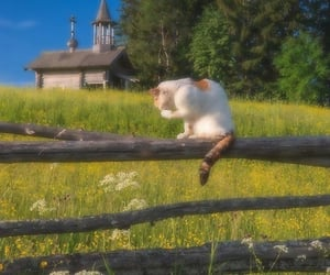 aesthetic, animal, and animals image