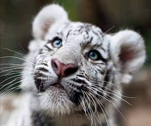 albino, Animales, and naturaleza image