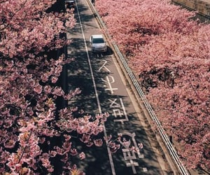 japan, pink, and pretty image