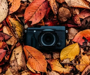 leaves, autumn, and camera image
