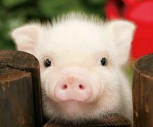animals, pig, and animais  image