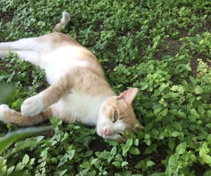 cat, cats, and nature image