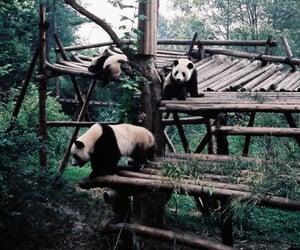 panda, green, and nature image