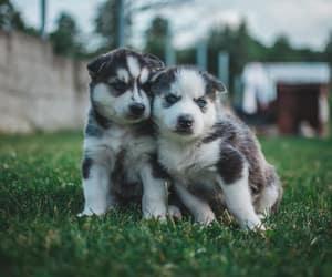dog, doggie, and doggy image