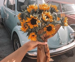 flowers, sunflower, and car image
