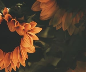 flowers, wallpaper, and sunflower image