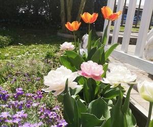 beautiful, garden, and like image