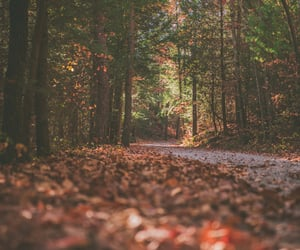 autumn, beautiful, and forest image