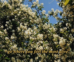 aesthetic, flower tree, and flowers image