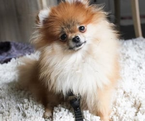 animal, cute, and carpet image