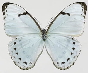 butterfly, soft, and blue image