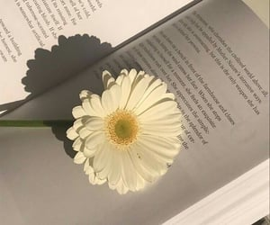 book, flower, and white image