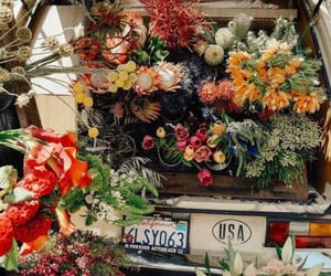 aesthetic, flowers, and tropical image