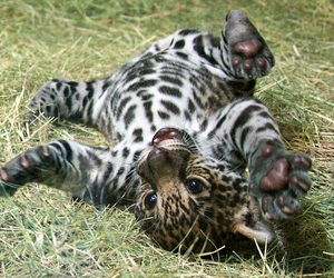 cute and animal image