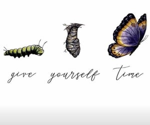 butterfly, quotes, and time image