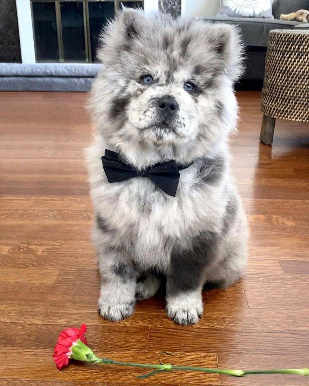 adorable, dog, and eyes image