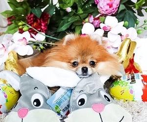chocolate, decorating, and dog image