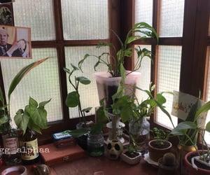 aesthetics, plants, and roomgoals image