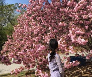 aesthetic, cherry blossom, and female image