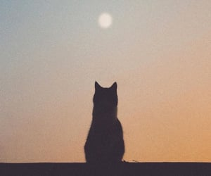 cat and moon image