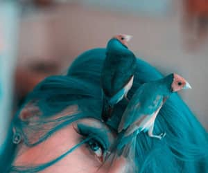 beauty, eyes, and bird image