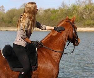 deutsch, equestrian, and europe image