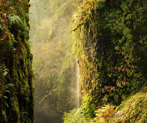 moss, water, and primevalforestgroups image