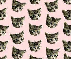 cat, кошечка, and обои image