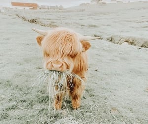 animals, cow, and cutie image