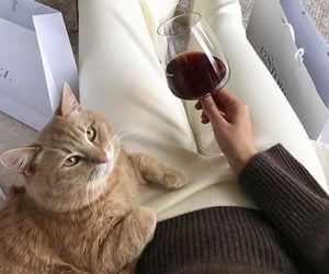 cat, wine, and aesthetic image