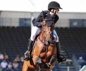 equestrian, hobbies, and sport image