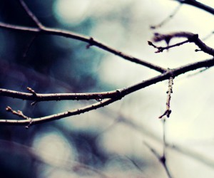 branches and twig image