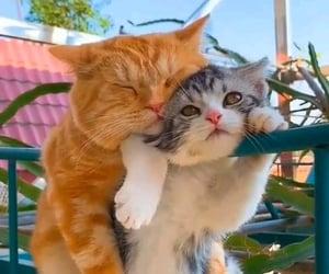 Animais, beautiful, and cats image