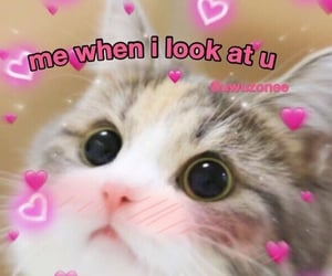 love, cat, and meme image