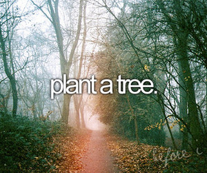 tree, before i die, and plant image