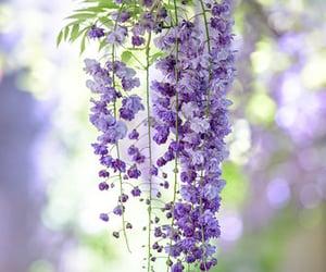 beautiful, bokeh, and color image