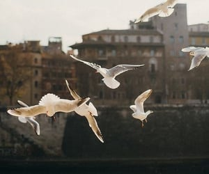 bird, fly, and photography image