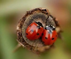 ladybug, nature, and red image