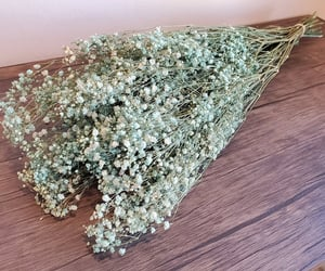 baby's breath, bulk, and do it yourself image