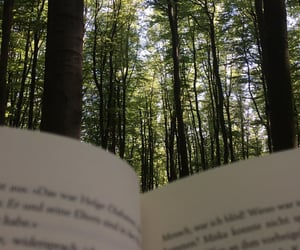 alternative, book, and forest image