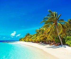 beach, tree, and blau image