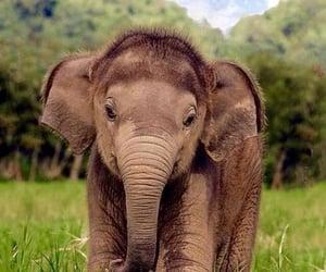 animal and elephant image