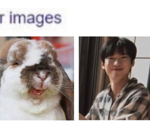 bunny, headers, and messy image